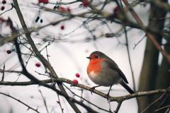 Robin-Mull