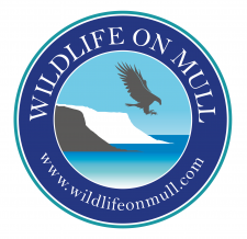 Wildlife and Scenic Tours on Mull