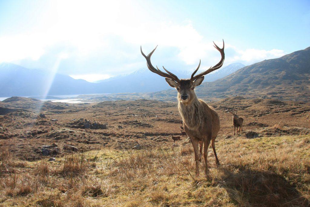 -Mull-in-background-Mull-Isle-of-Mull-Argyll